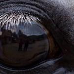 Big eye of Wiosna -Warwara - Eukaliptus