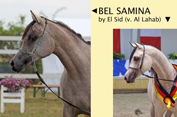 Bel Samina Collage englisch