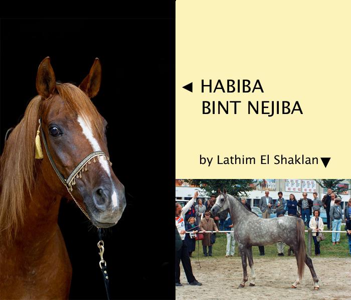 Collage Habiba