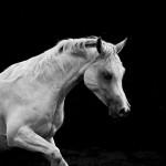 Pferde-Fotos-Simone-Sept-2013-009.jpg