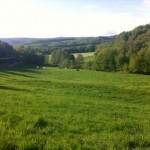the big pastures of Malenga Arabians in Germany