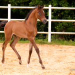 Joleen MA by Mystic Dream (Extreme x Mysterious Lady by Ekstern) out of Jade A (Aja Justified)