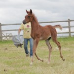 Colt by EKS Alihandro - 4 weeks old-a