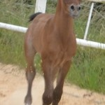 Joleen MA - 3 days old