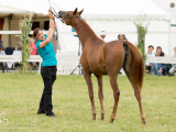 Ariyana MA is Gold-Champion & Best in Show