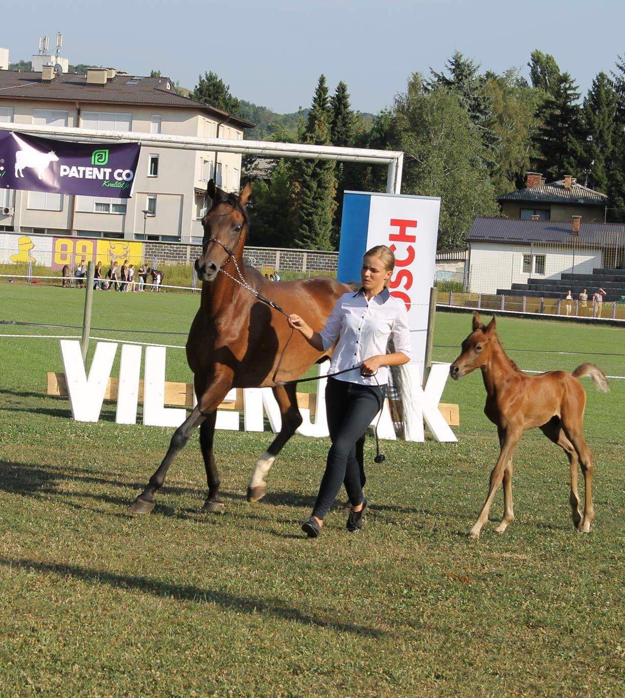 colt foal by Al Gasama