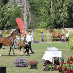 Al Gasama colt foal wins Silver-Champion