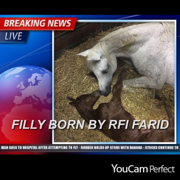 Nirah MA by RFI Farid